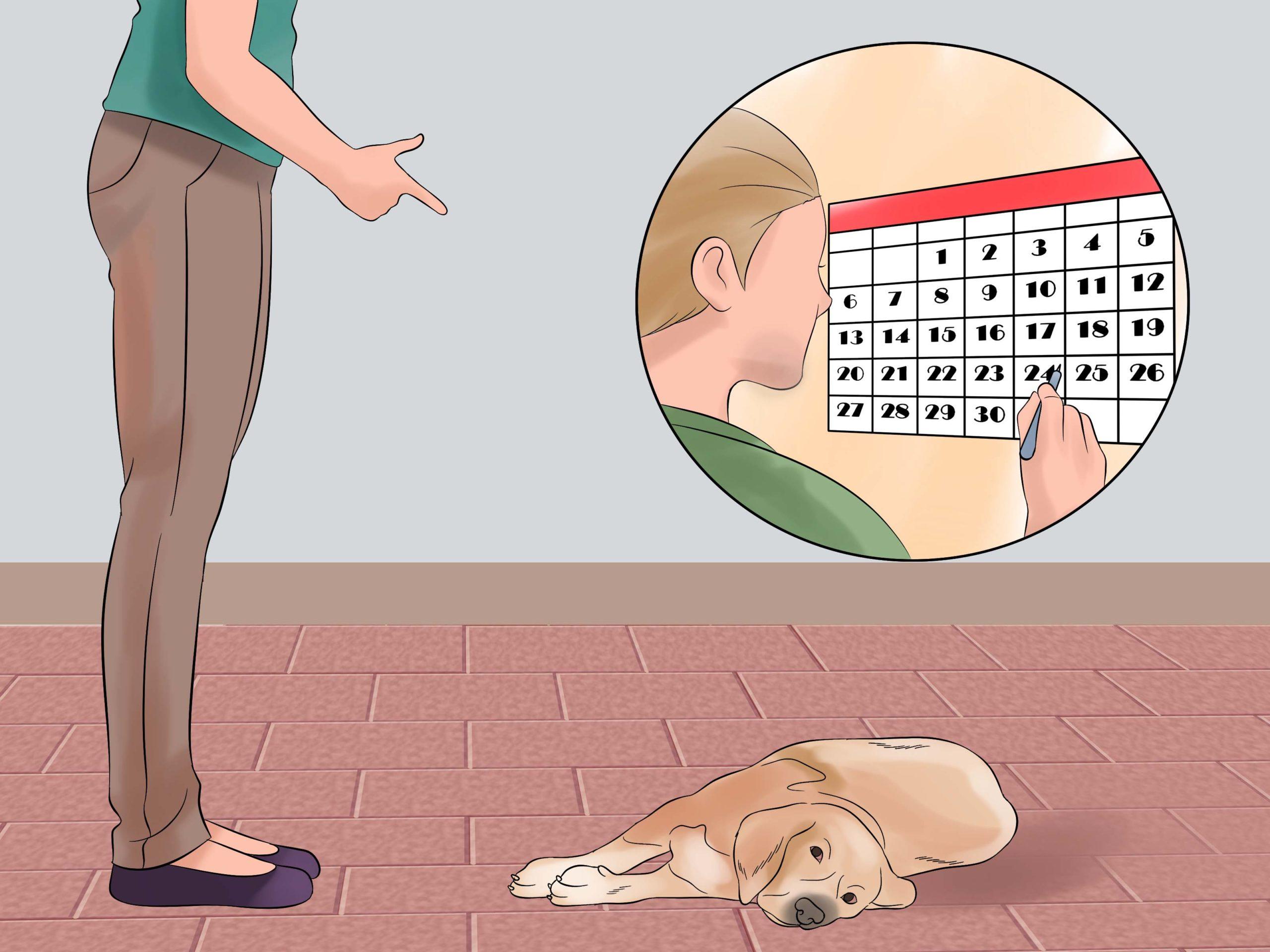 Cách huấn luyện chó giả chết đơn giản tại nhà