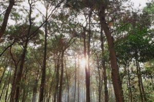 Cùng trải nghiệm 6 khu dã ngoại mới toanh sát xịt Hà Nội