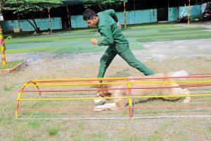 Trung tâm huấn luyện chó Trung Đức chuyên nghiệp nhất
